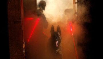 S.W.A.T. Tactical K9